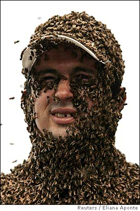 supposed comrade calling peeps killer bee swarm